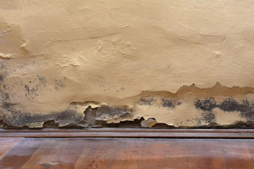 Schimmel und Feuchtigkeit in der Wohnung verhindern: Haus-Trocknen.ch