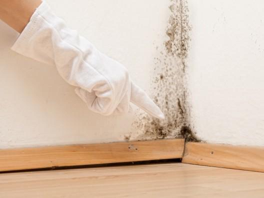 Schimmel und Feuchtigkeit im Haus muss nicht sein: Haus-Trocknen.ch