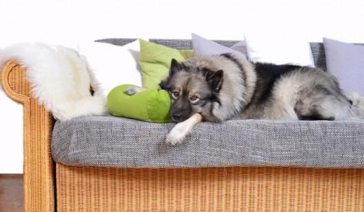 Polstermöbel laden zum gemütlichen Relaxen ein